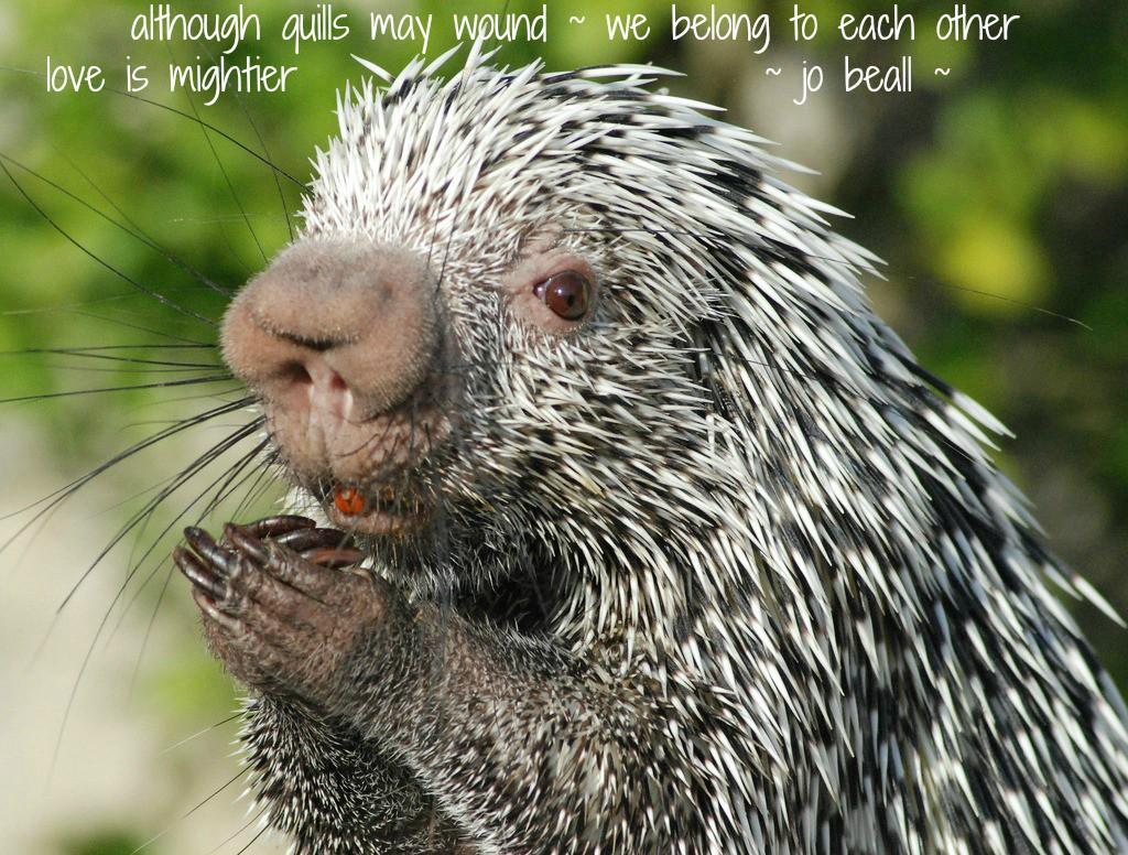 Named Open October 16 porcupine