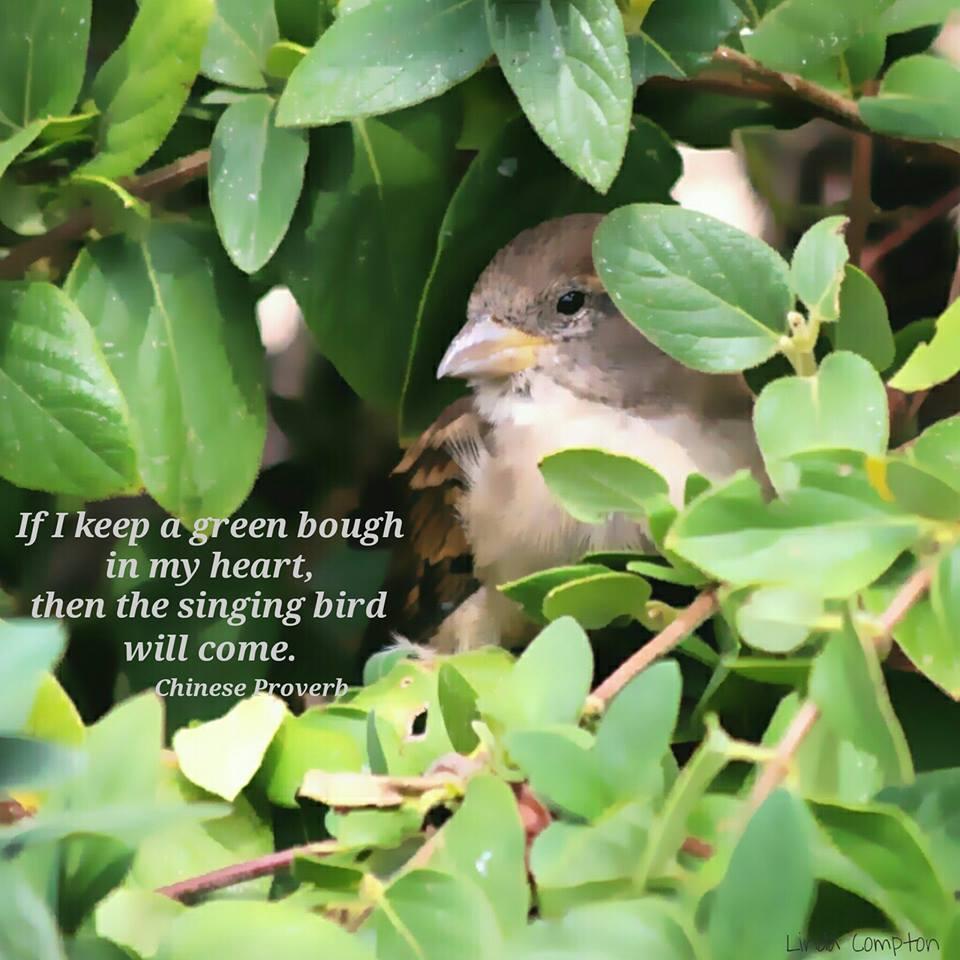 Named Freely Flowing 17 Caravan of Re-Joy-Sing Green Bough Singing Bird.
